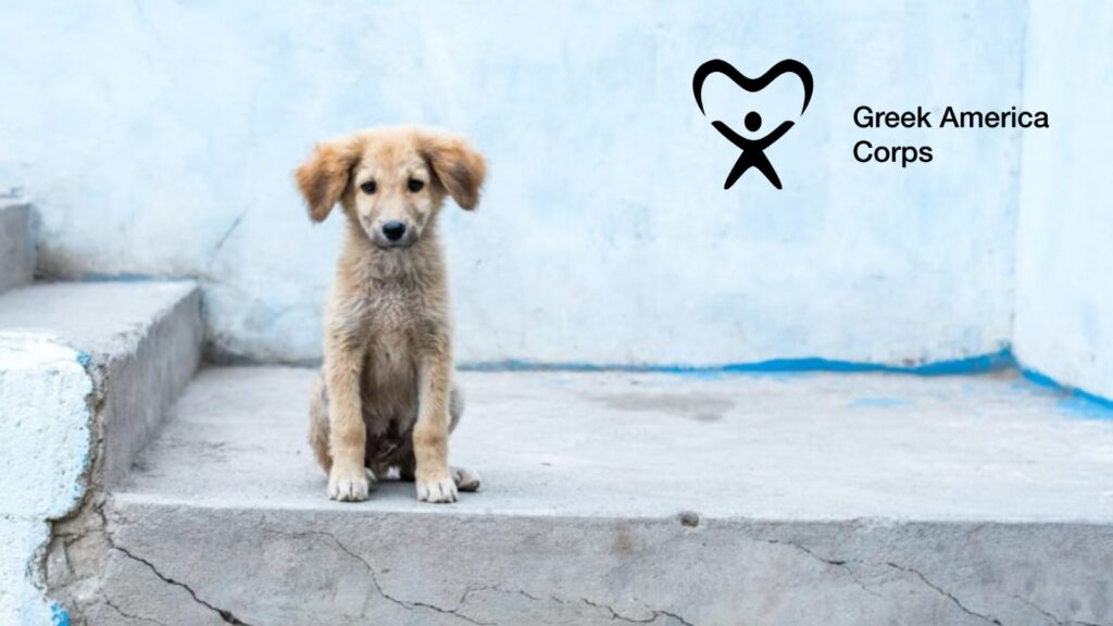 Stray dog main page GAC logo-min